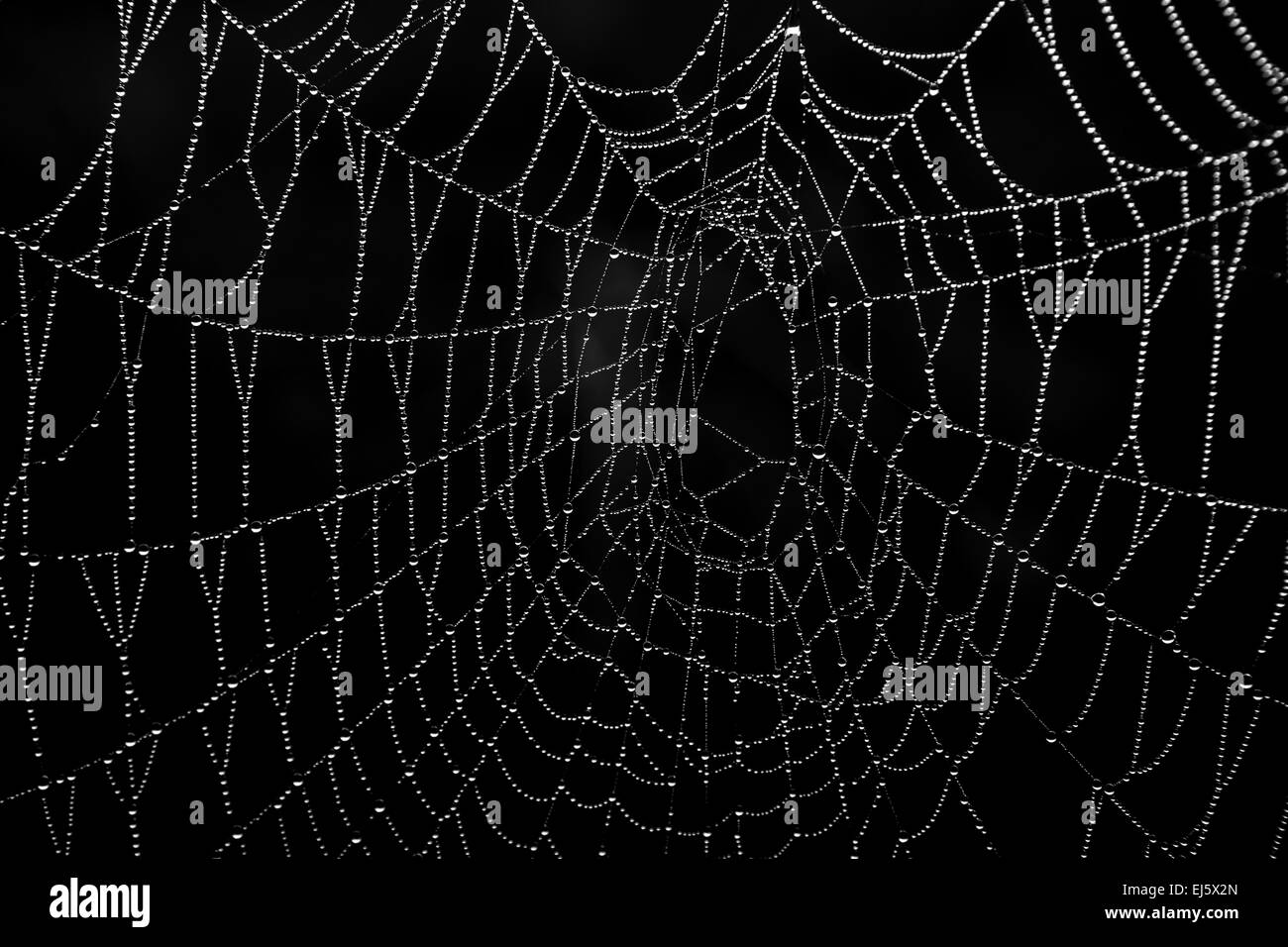 A spider's web in the morning sun with water droplets making a pattern - Stock Image