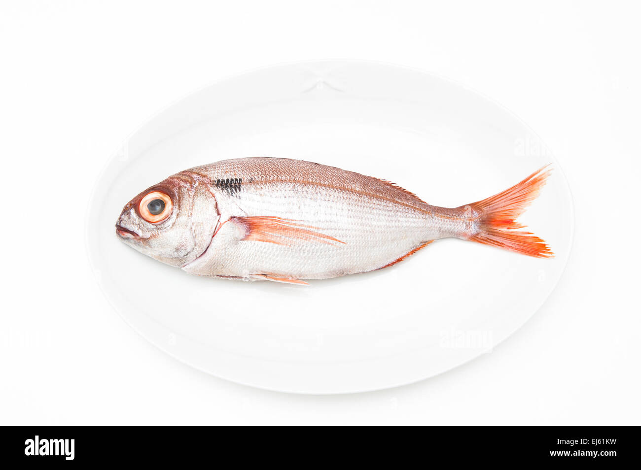 Pezzogna fish, variety of sea bream, on white plate and white background Stock Photo