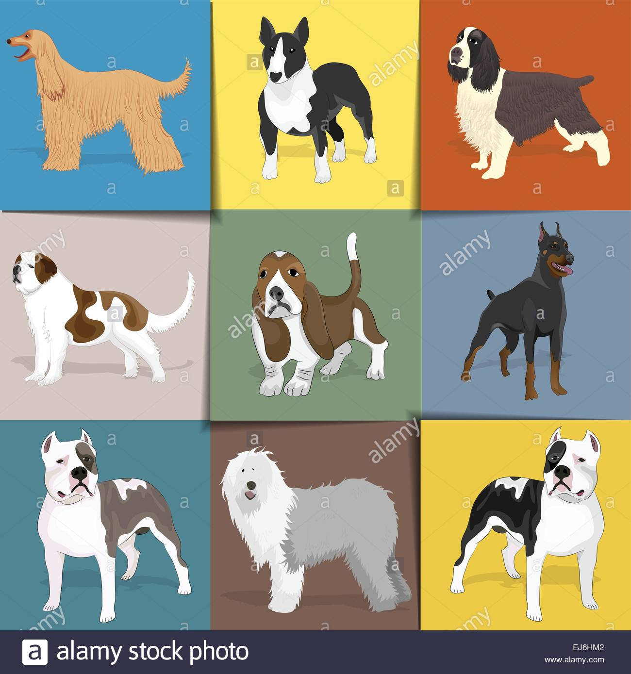 Set of dogs with square background. Vector eps10. - Stock Image