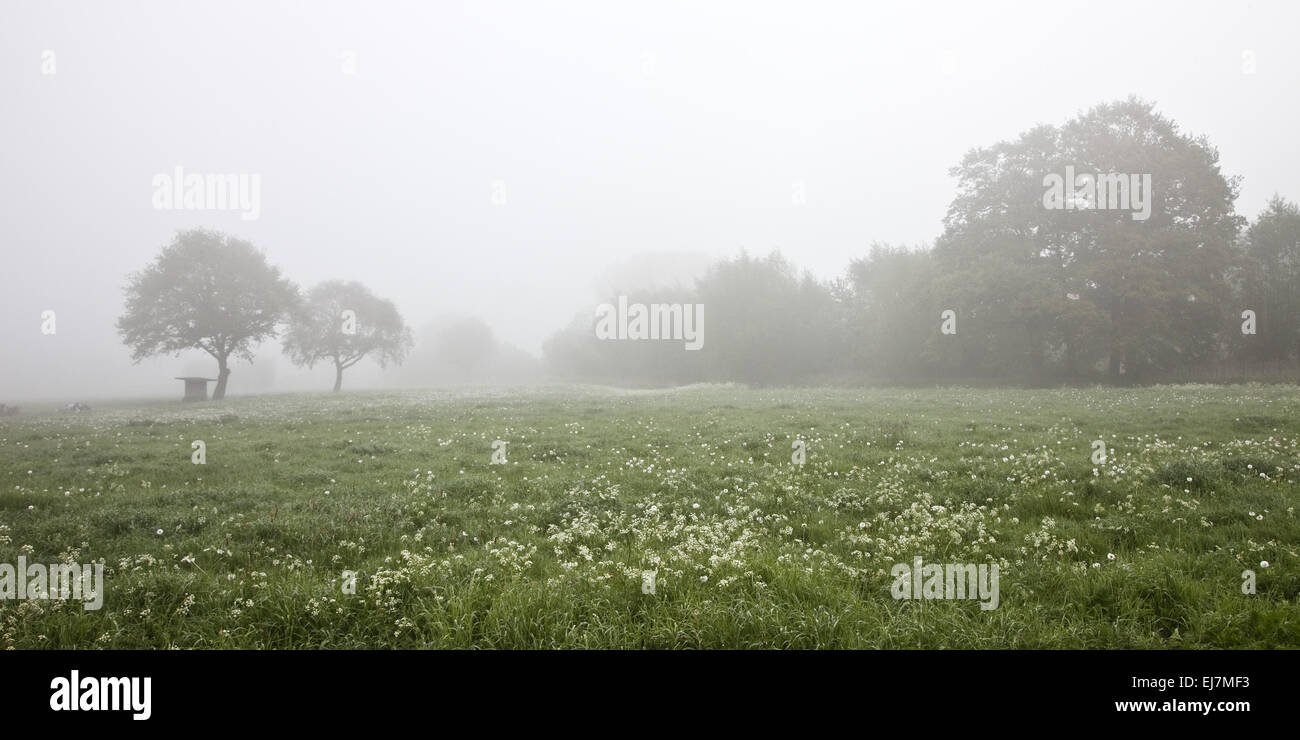 Landscape in the Mist, Hamm, Germany - Stock Image