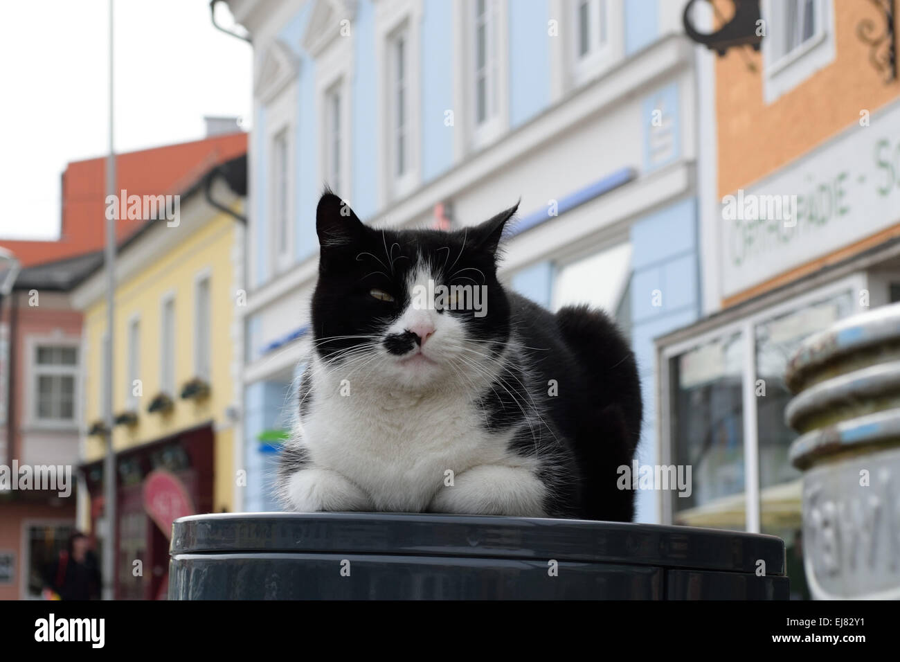 Cat middle of the town square Stock Photo
