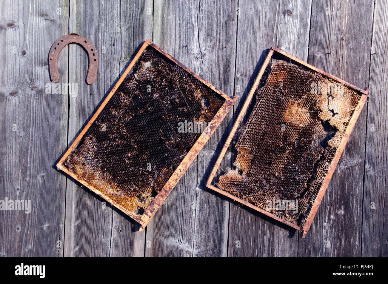 two old honeycomb bee comb and rusty horseshoe on wooden farm wall - Stock Image