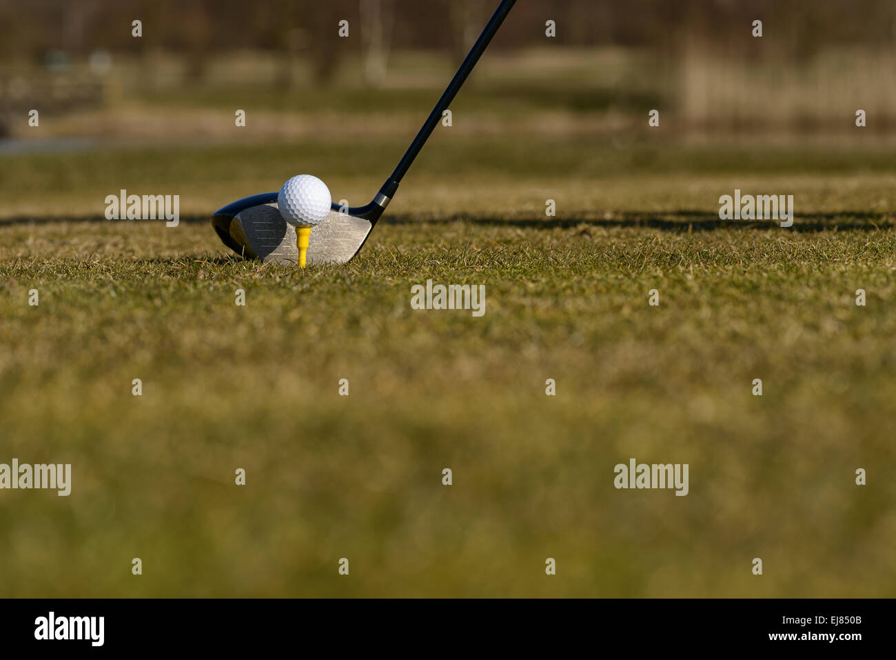 Conceptual image of a golfer teeing-off on the fairway with a low angle view of the ball on a tee and head of the - Stock Image