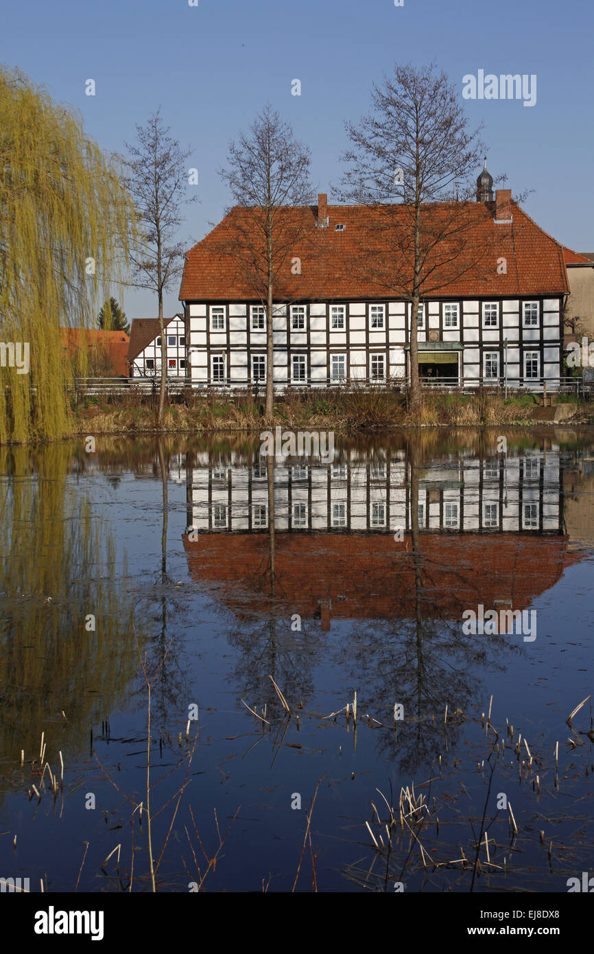 village pond - Stock Image
