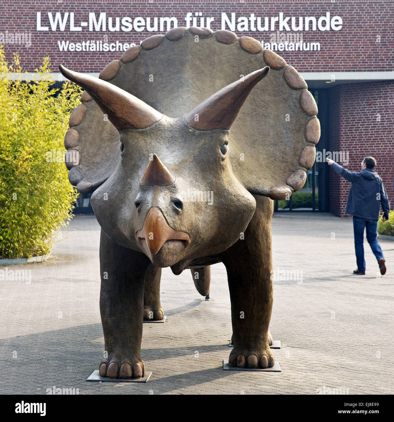 Museum of Natural History, Muenster, Germany - Stock Image