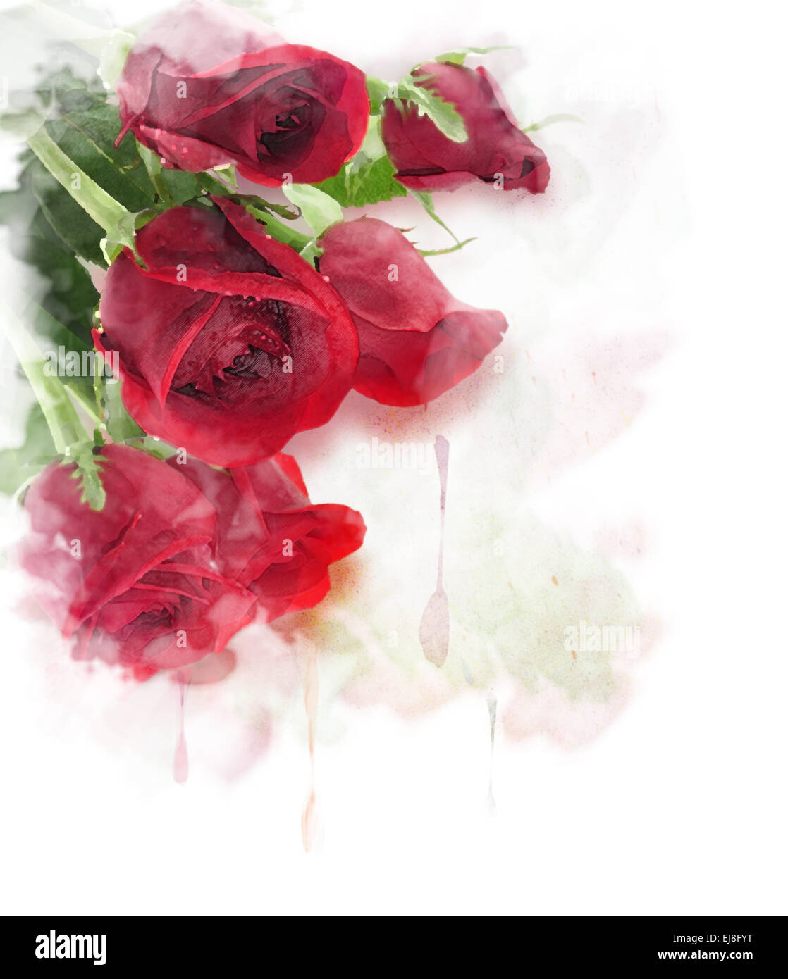 Red Roses Digital Painting - Stock Image