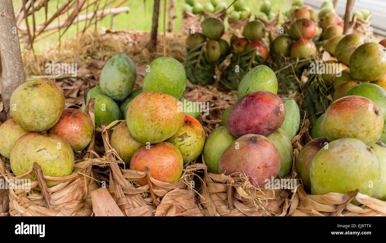 Mangos Fruit Stand Stock Photos & Mangos Fruit Stand Stock Images ...