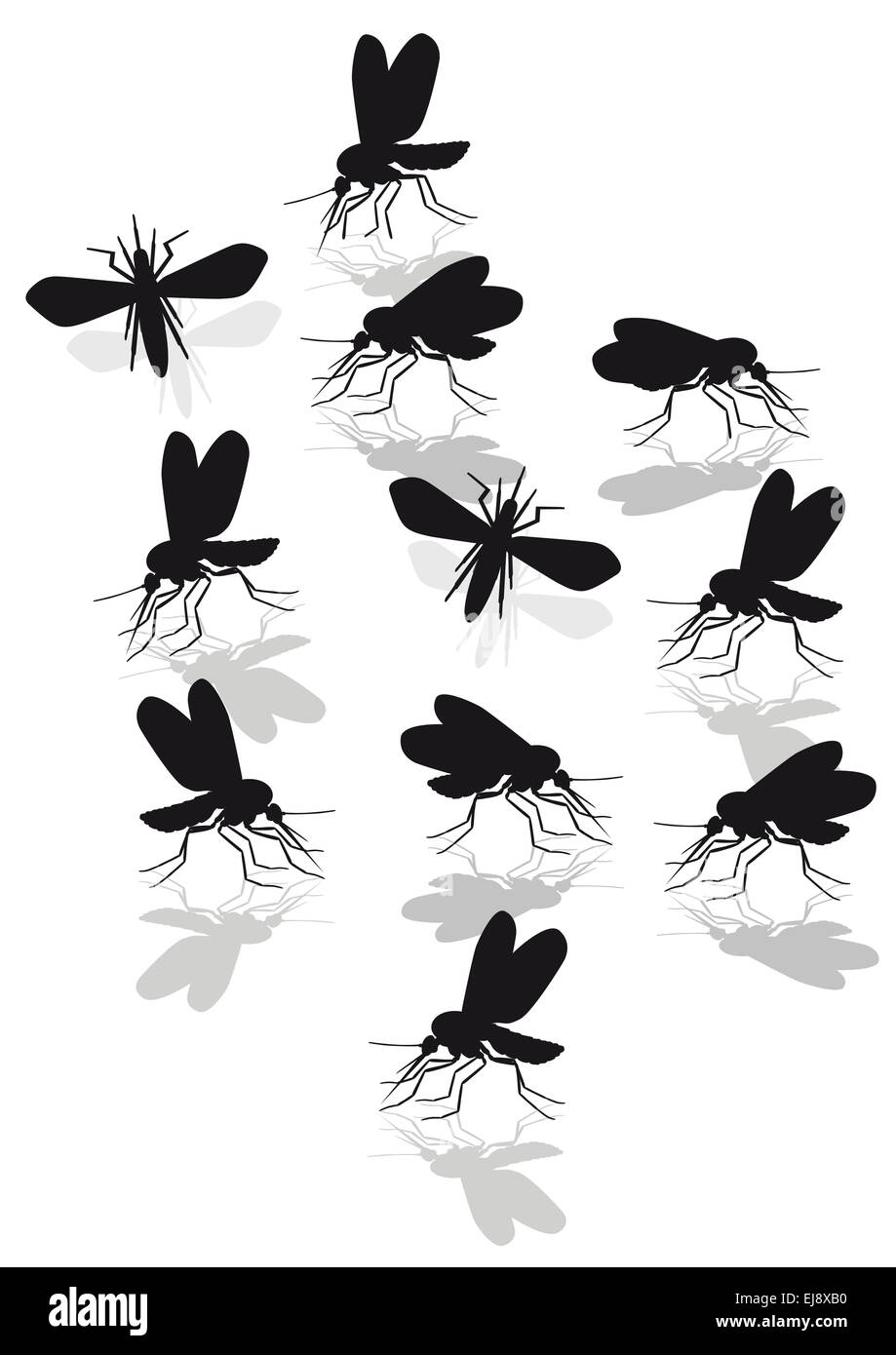 mosquitoes plague Stock Photo