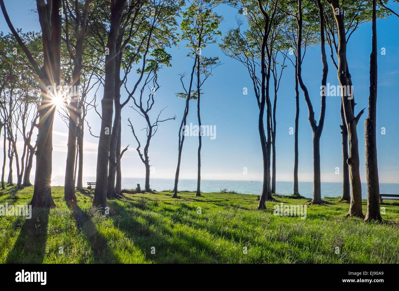 The sun shines through some trees Stock Photo