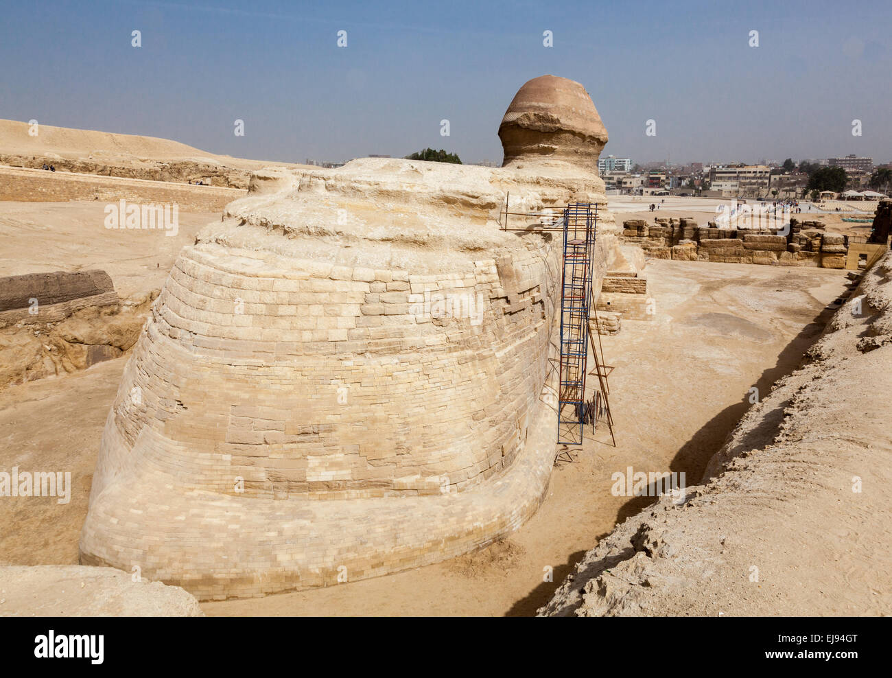 Close up of rear view of Sphinx Cairo - Stock Image