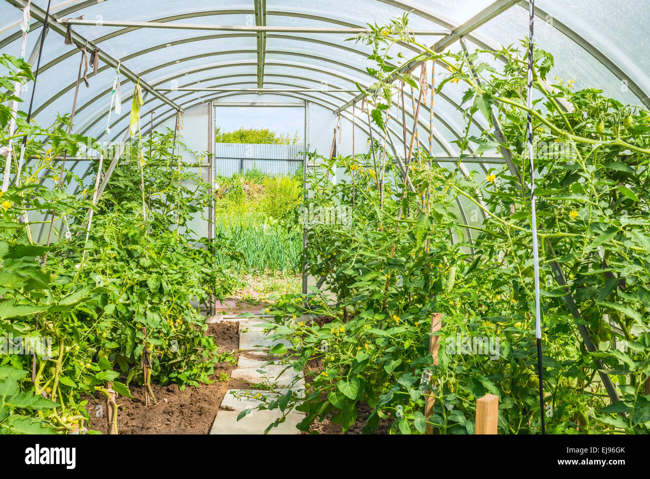 arched greenhouse - Stock Image