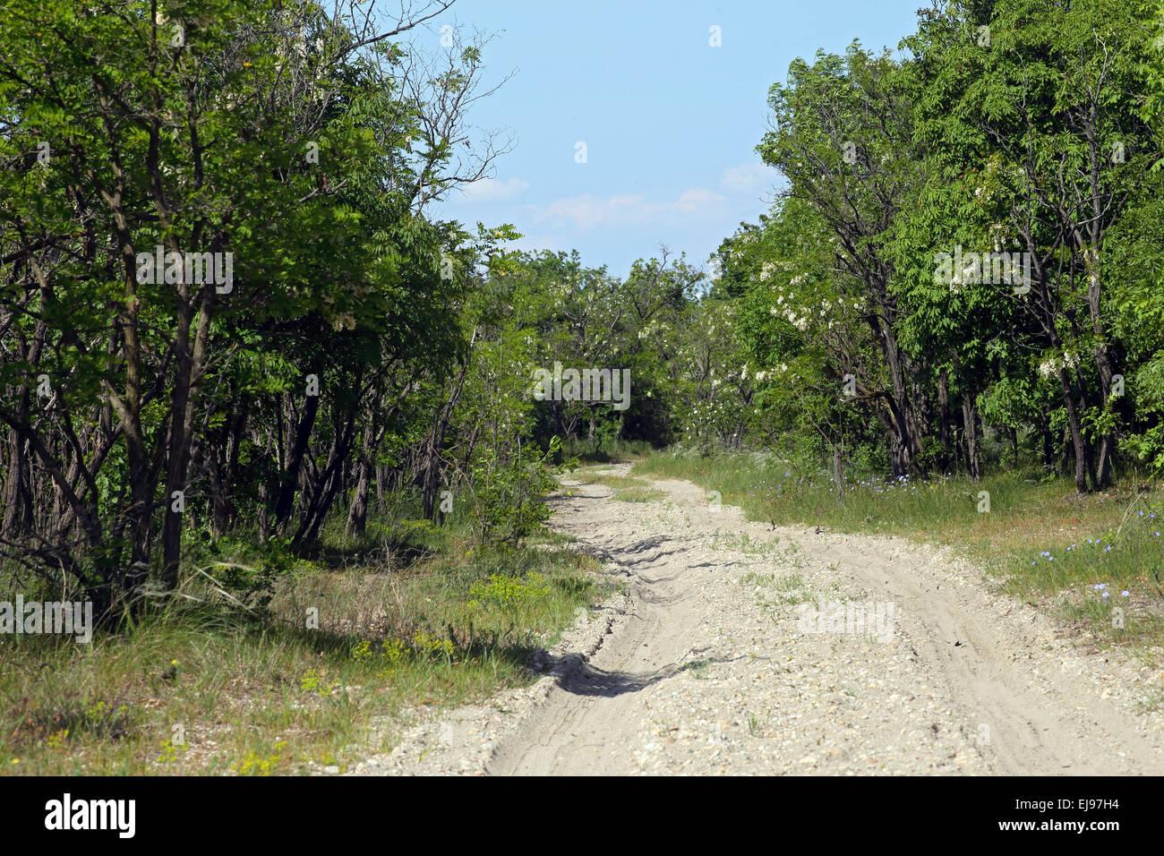 Sandy path at Lake Neusiedl, Austria Stock Photo