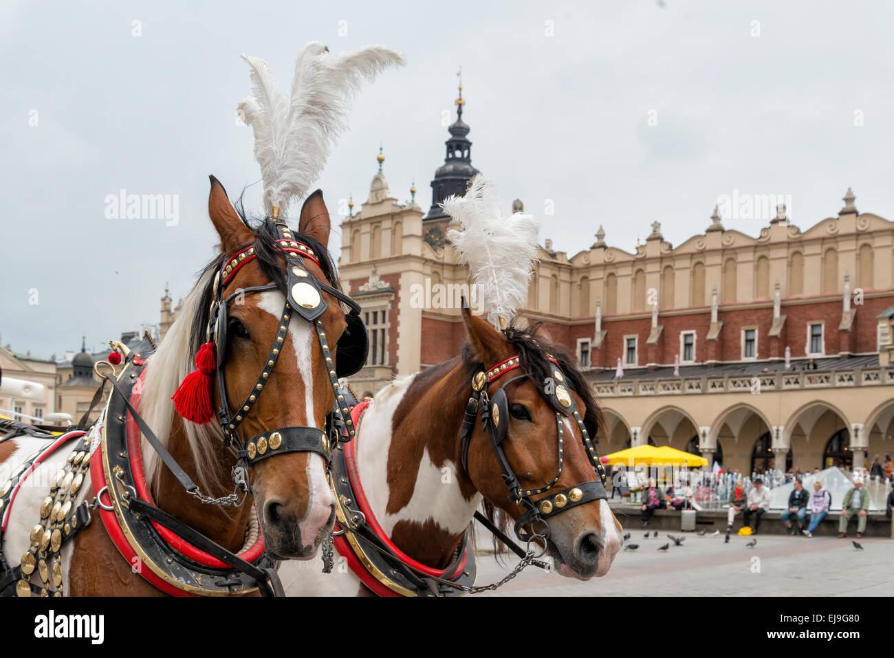 Horses in Krakow Stock Photo
