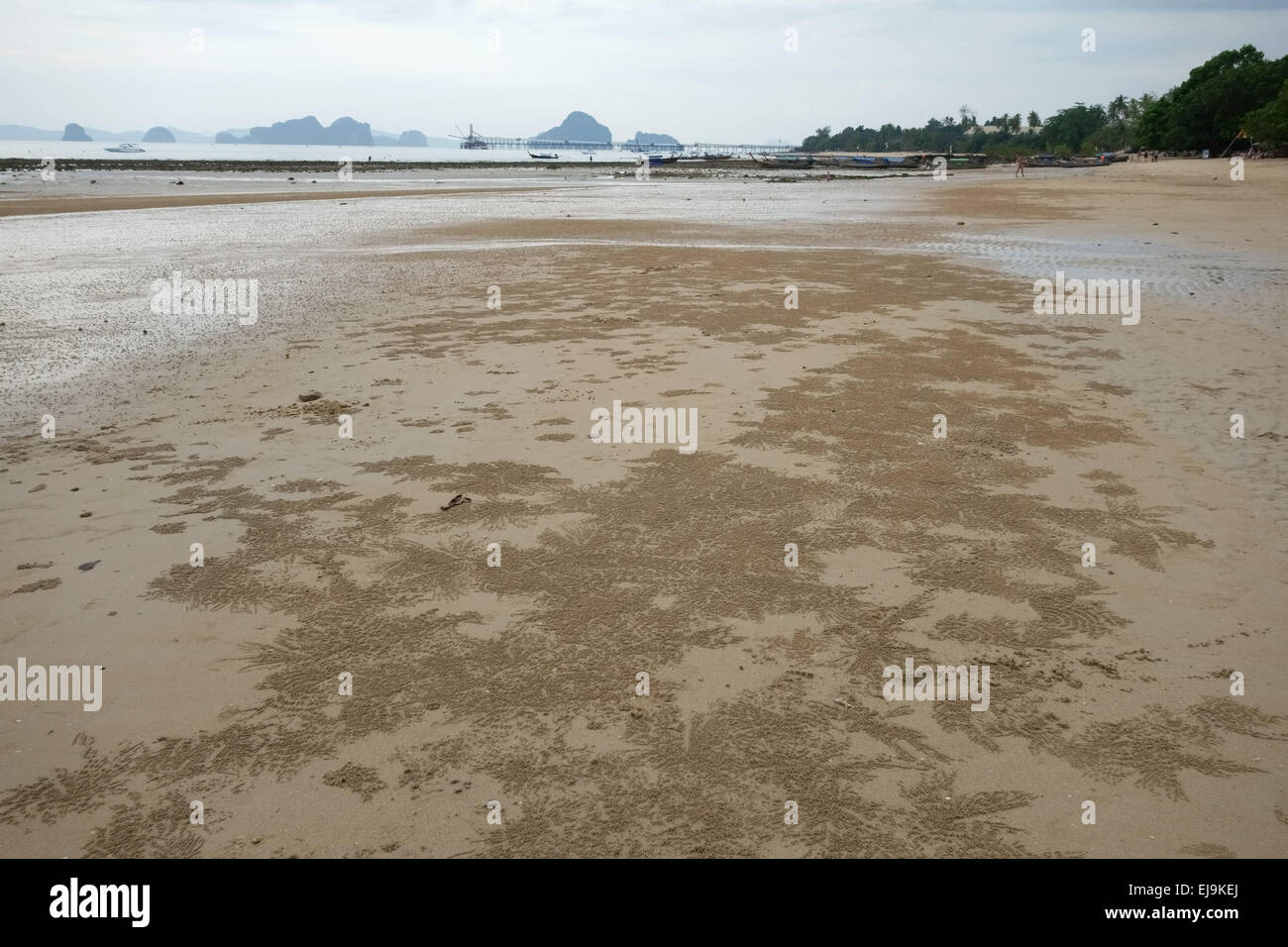 Patterns formed by balls created by sand bubbler crabs, Scopimera spp., at low tide on a beach near Krabi on the - Stock Image