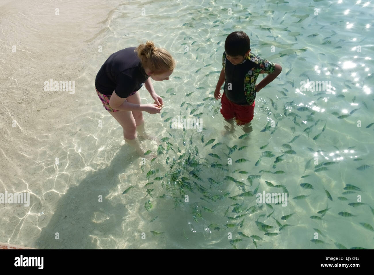 A girl and young boy feeding Indo-Pacific sergeant fish, Abudefduf vaigiensis, in the clear waters off Koh Poda - Stock Image