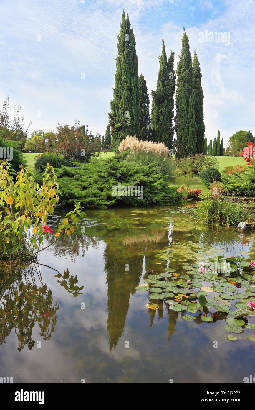 A pond with lilies - Stock Image