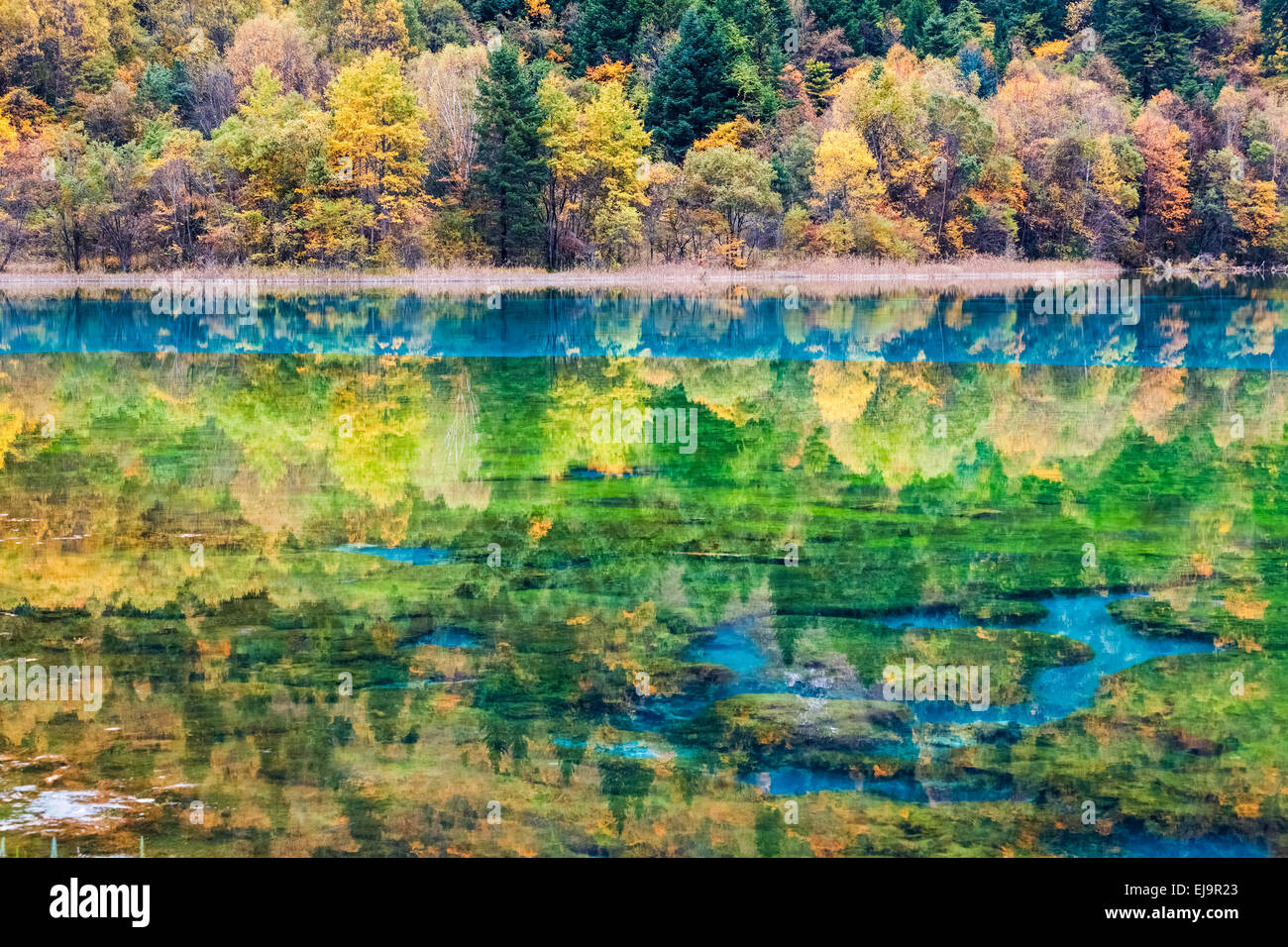 autumn fairy tale landscapes in jiuzhaigou - Stock Image