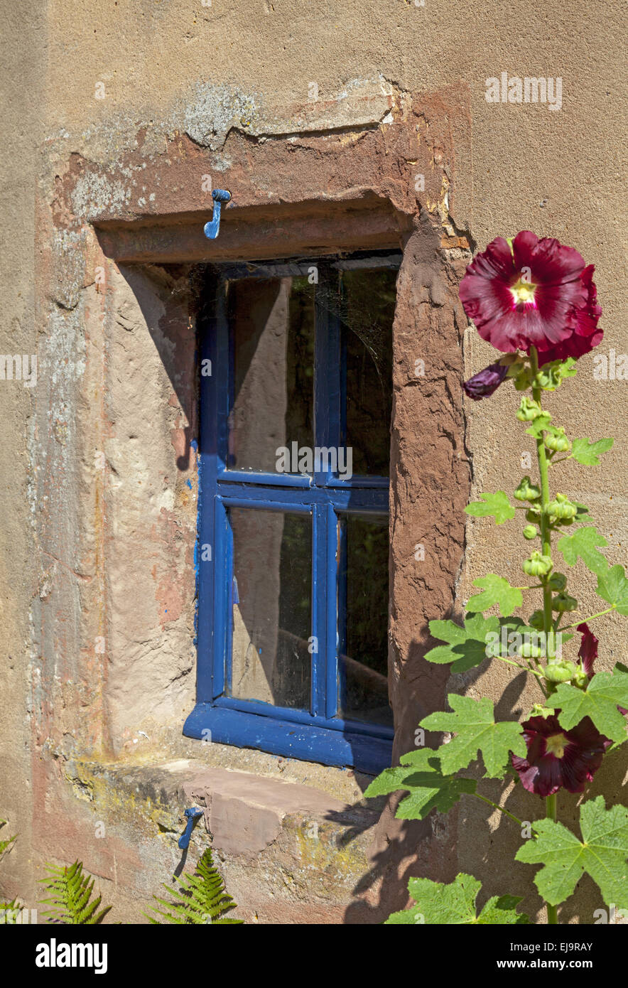 Blue window with hollyhock Stock Photo