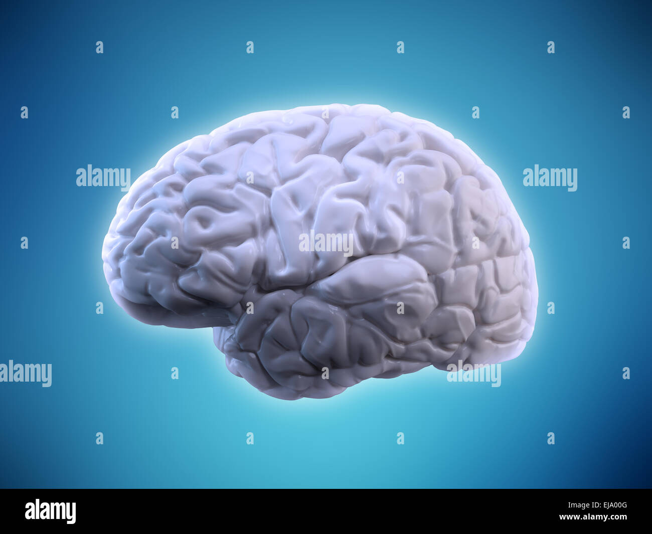 Human brain illustration - human anatomy - Stock Image