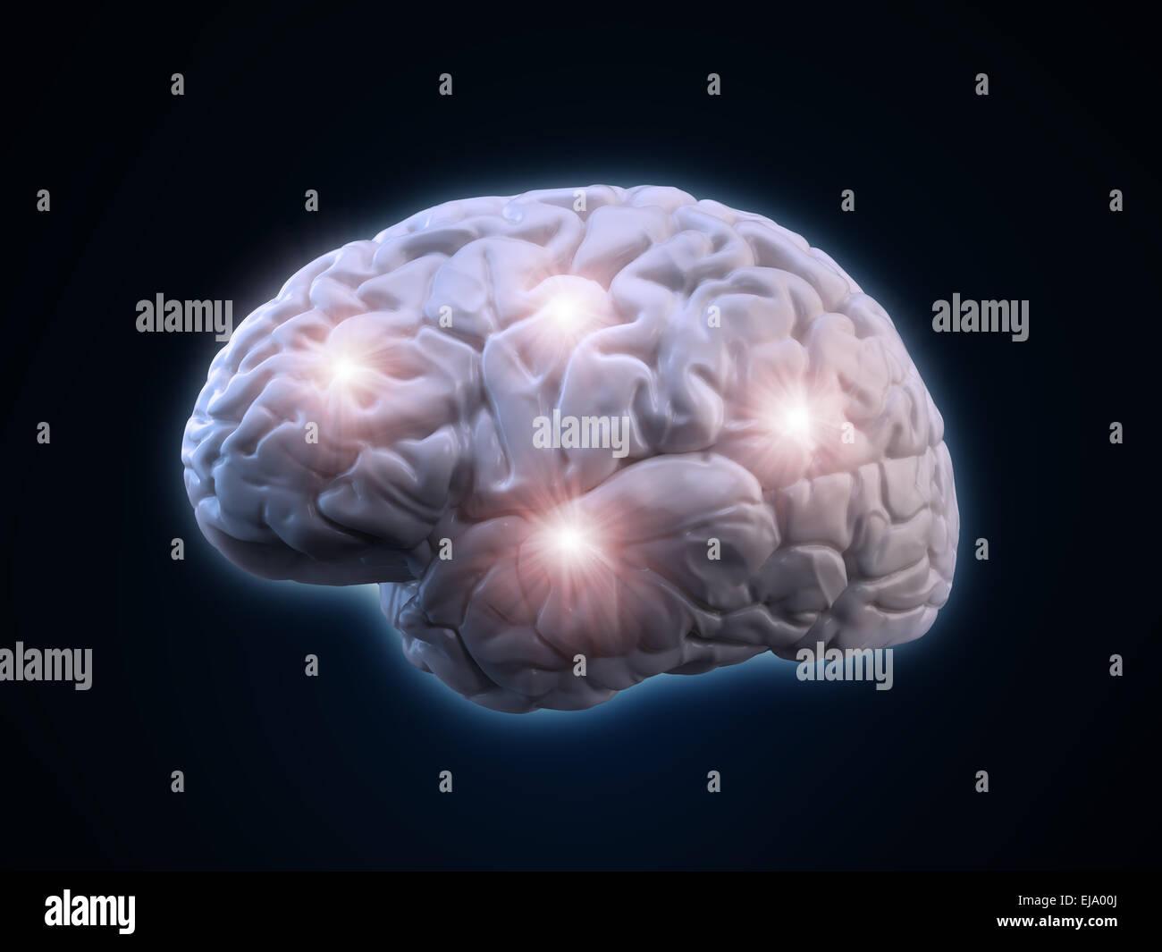 Human brain illustration - human anatomy - Stock Image