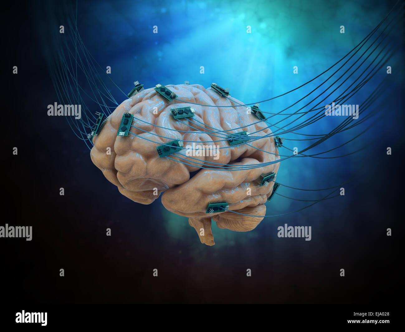 Human brain connected to cables and computer chips - Stock Image