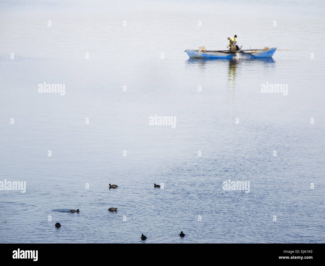 lonesome fisher with coots Stock Photo