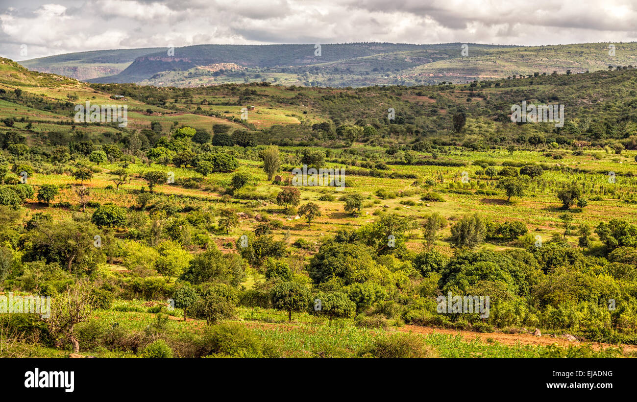 Beautiful landscape of Harar - Stock Image