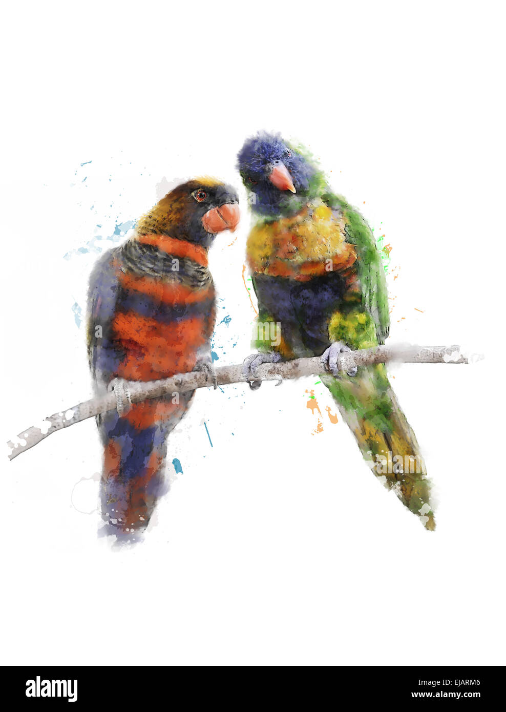 Watercolor Image Of Colorful Parrots Stock Photo 80143398 Alamy