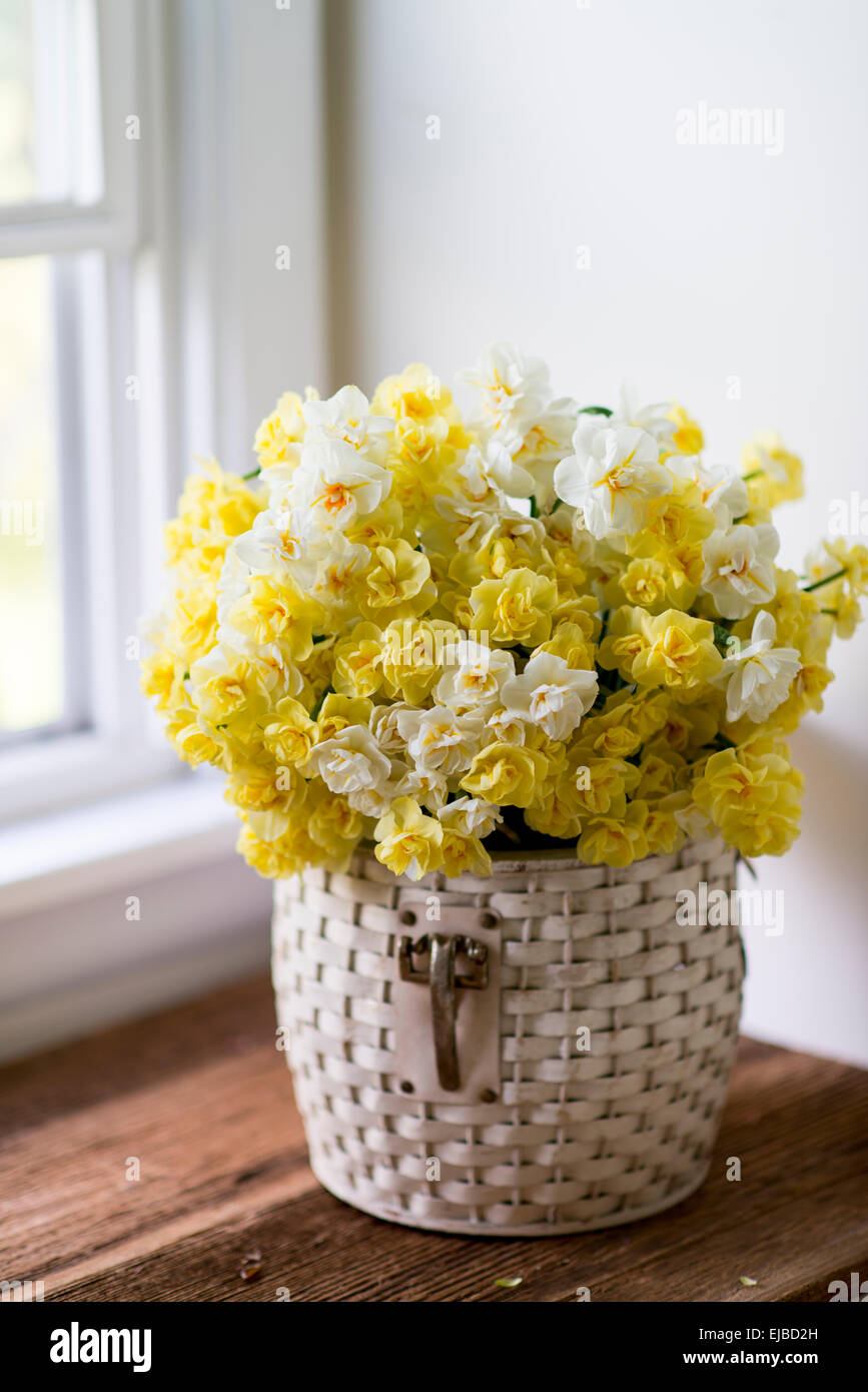 Still life of cut Narcissus Cheerfulness, Sir Winston Churchill and Bridal Crown in basket - Stock Image