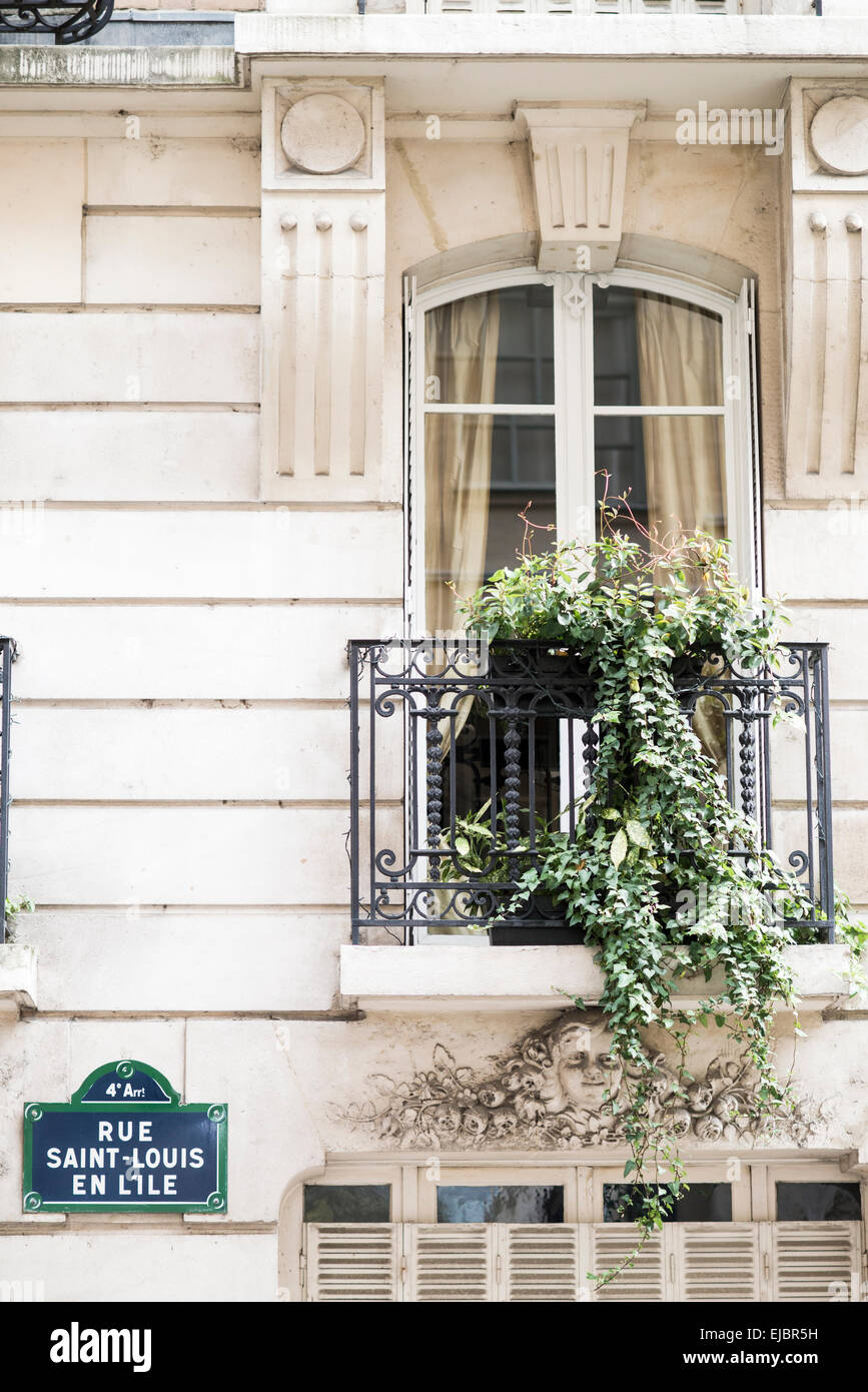 Window with ivy trailing off balcony on the Ile Saint-Louis, Paris, France - Stock Image
