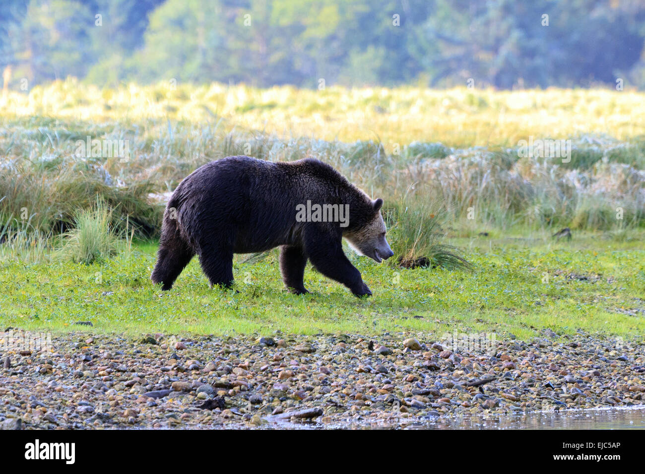 Graulich Stock Photos & Graulich Stock Images - Page 2 - Alamy