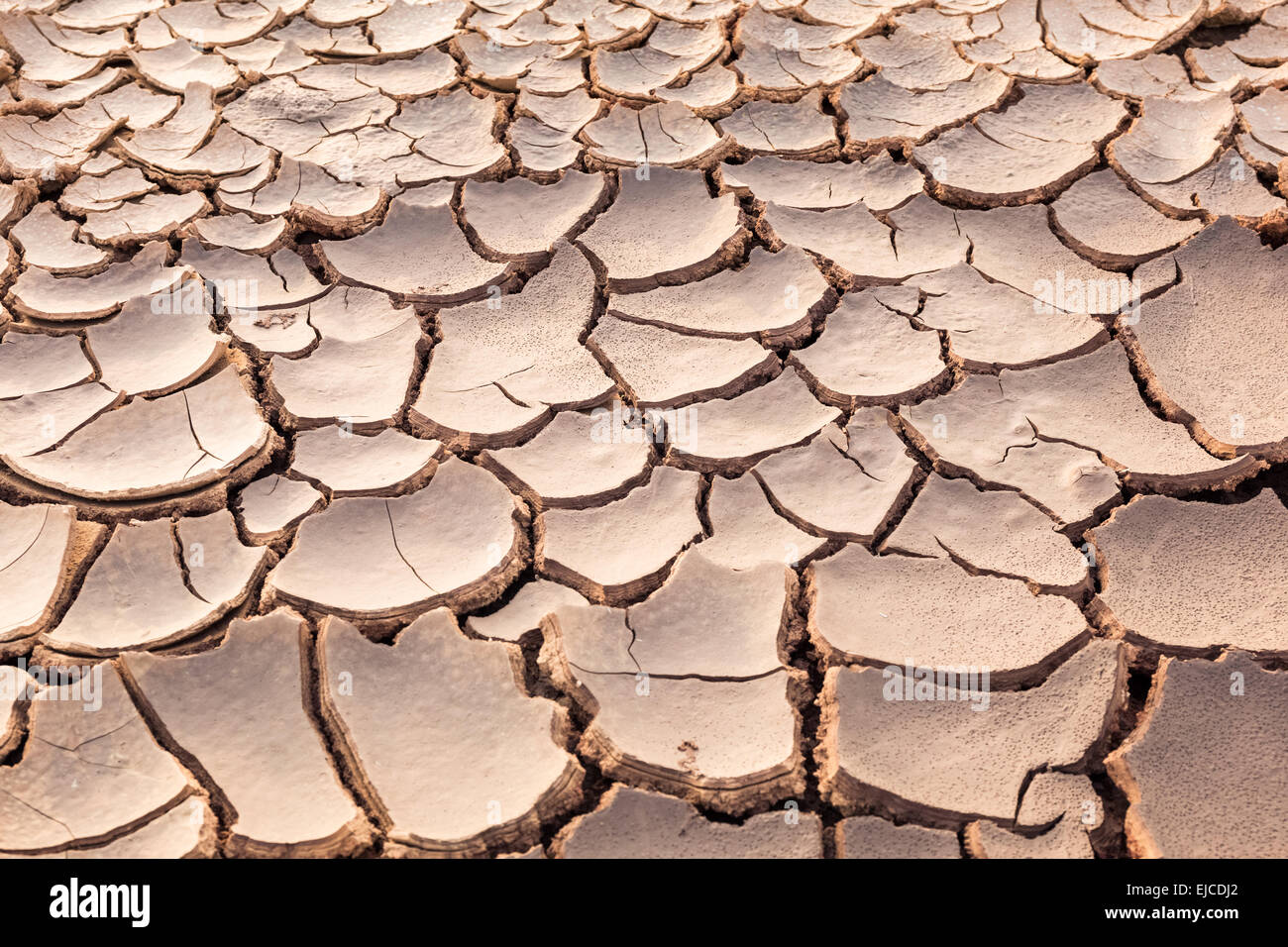 the ground parched and cracked - Stock Image