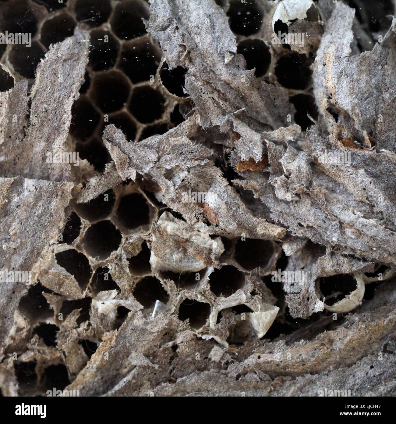 Wasp's Nest - Stock Image