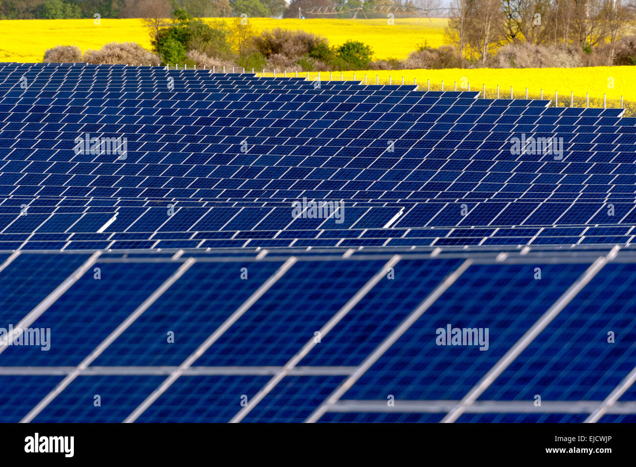 Solar panels in a rapeseed field - Stock Image