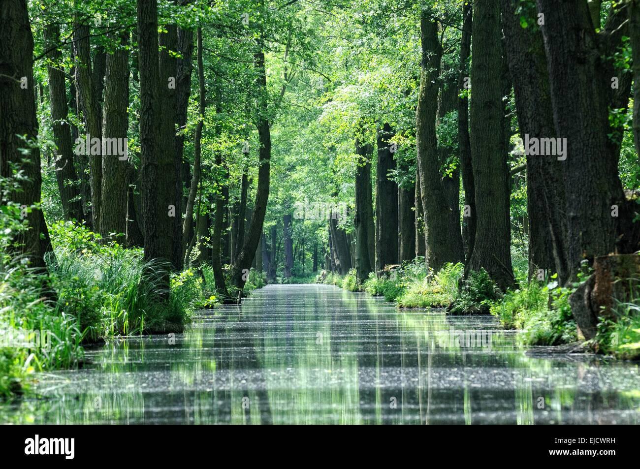 New Spree Burg-Kauper-Leipe Spreewald forest Stock Photo