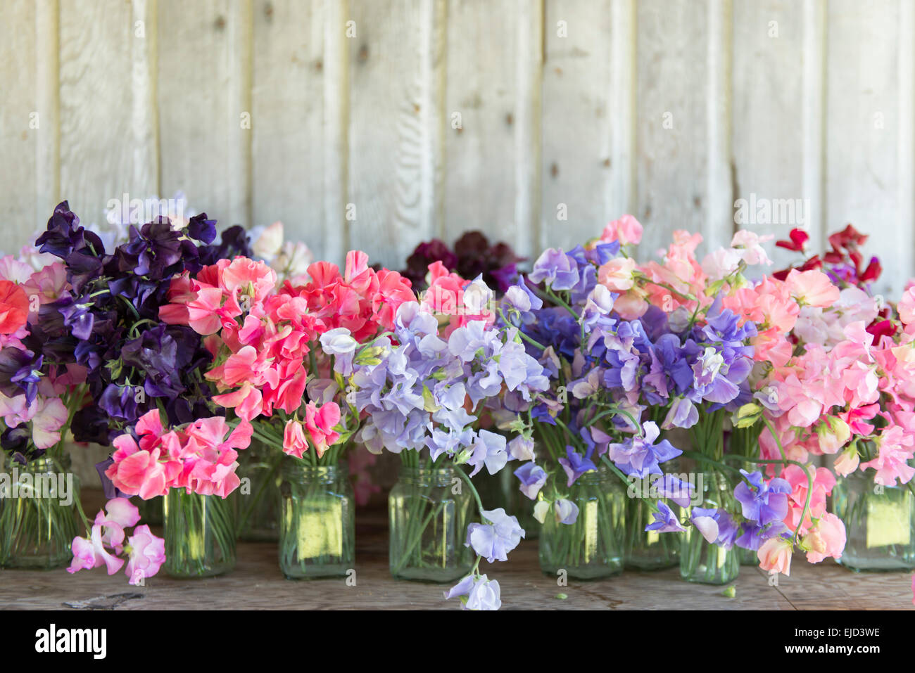 Mixed sweet peas in jars on rustic table - Stock Image
