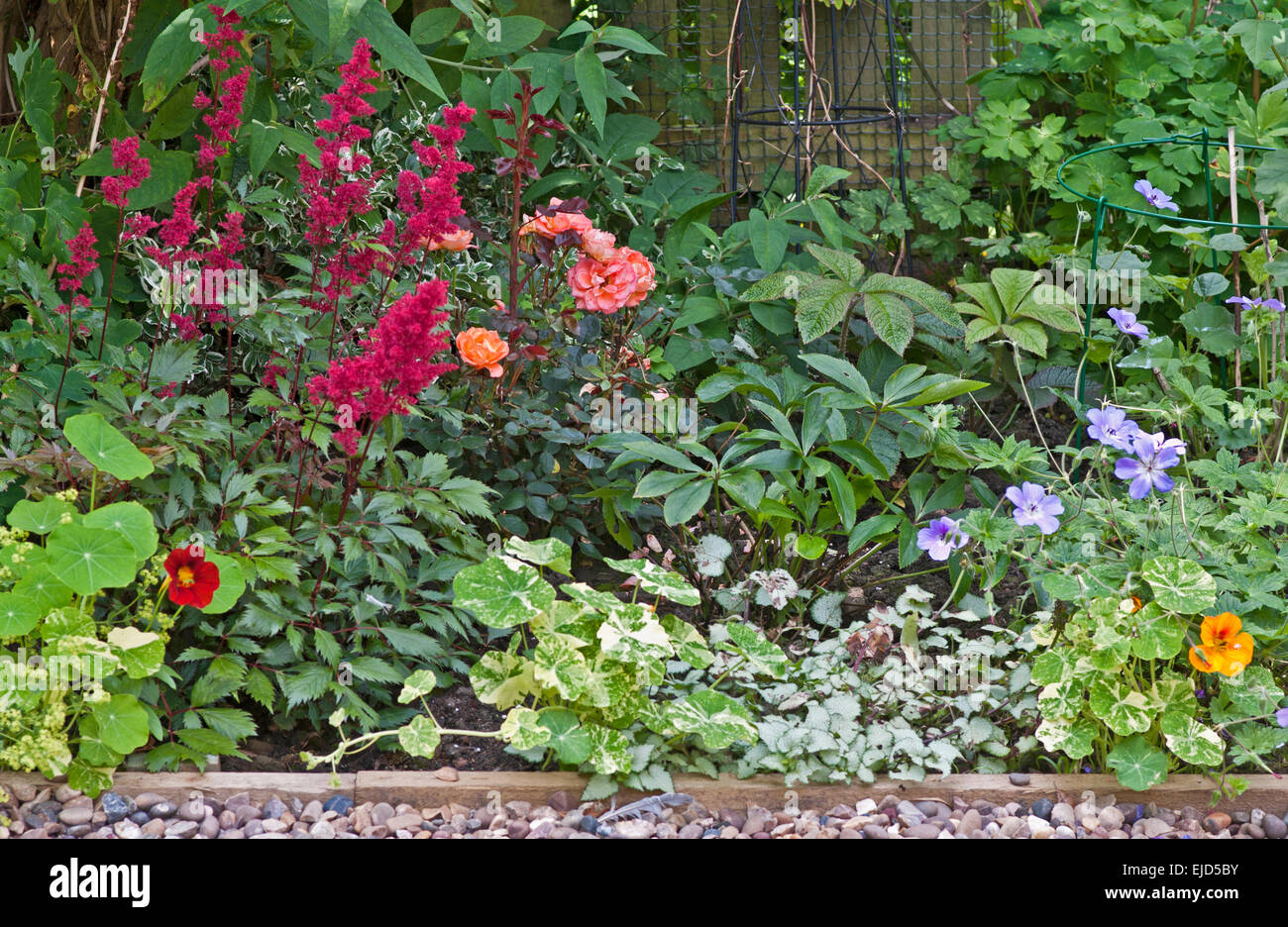 Detail of mixed herbaceous and shrub border in English garden with contrasting colours and shapes of foliage and - Stock Image