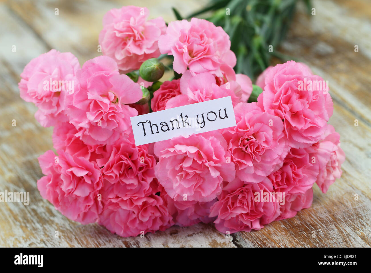 Thank you card with pink carnation flowers stock photo 80197769 alamy thank you card with pink carnation flowers izmirmasajfo