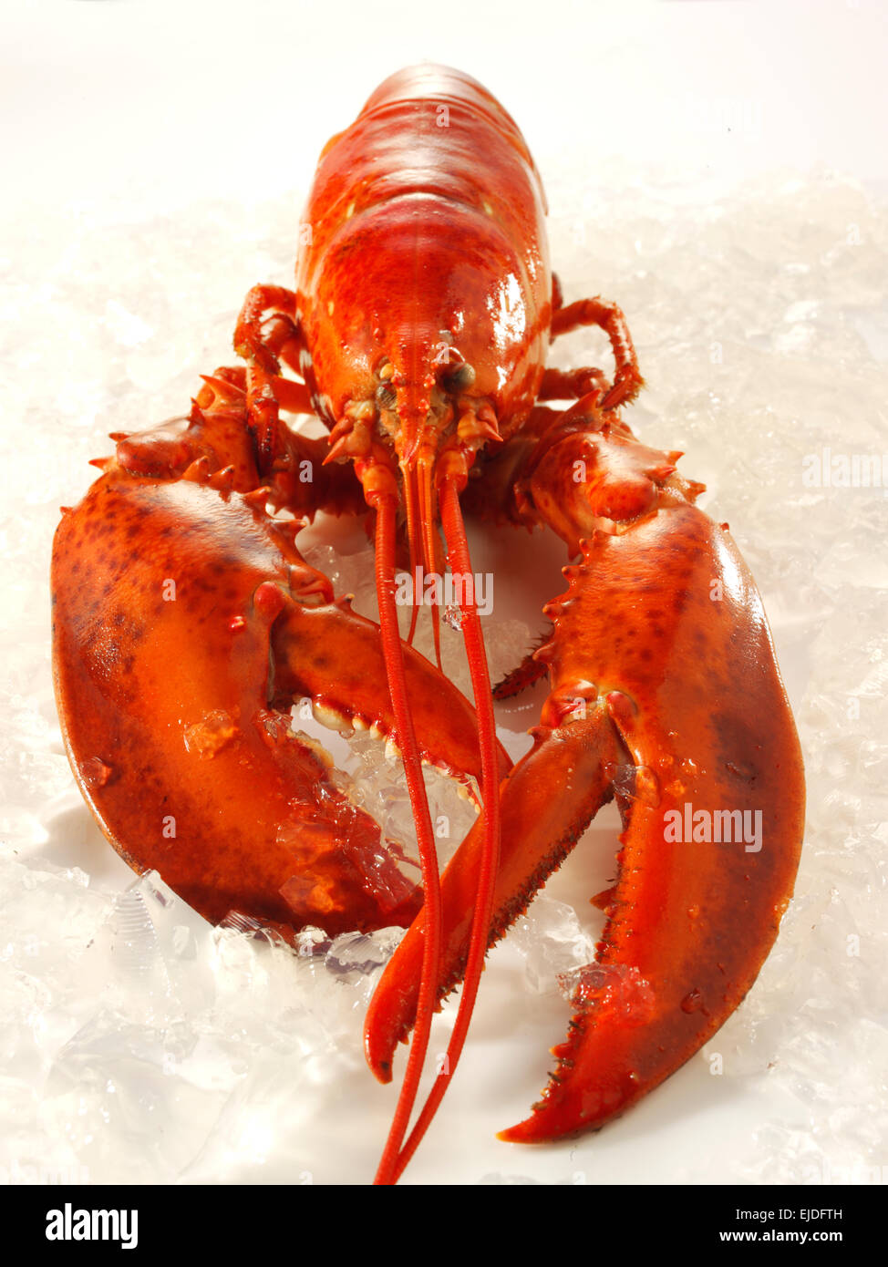 fresh whole cooked lobster on crushed ice - Stock Image