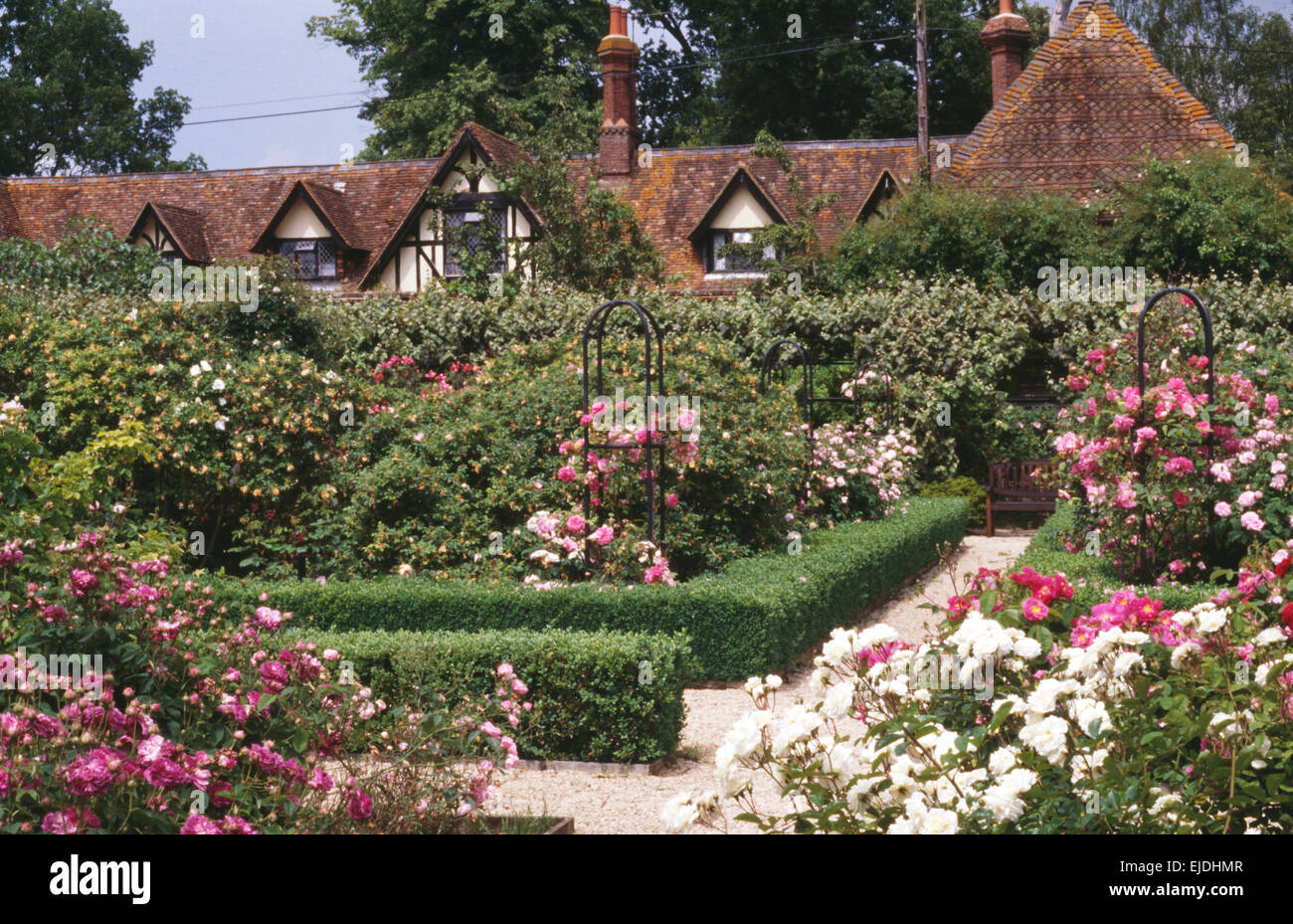 Low clipped box hedging in large rose garden in summer with a gabled ...