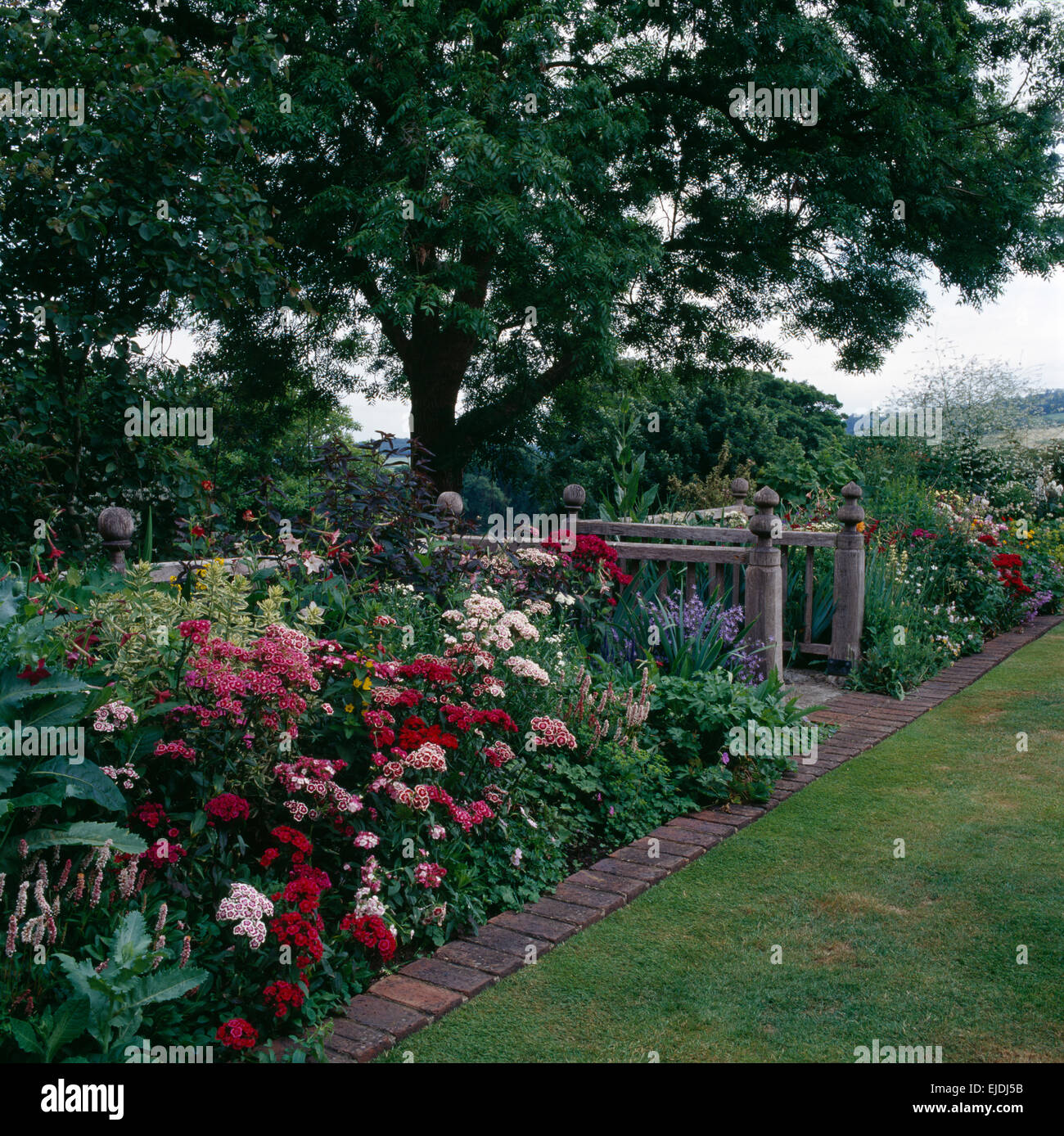 Pink and red sweet Williams and peonies in border with brick paved edging in country garden in summer - Stock Image