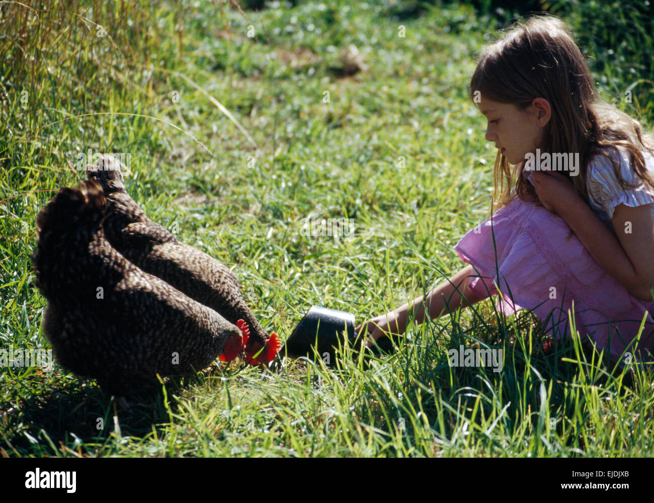 Small girl feeding black hens - Stock Image