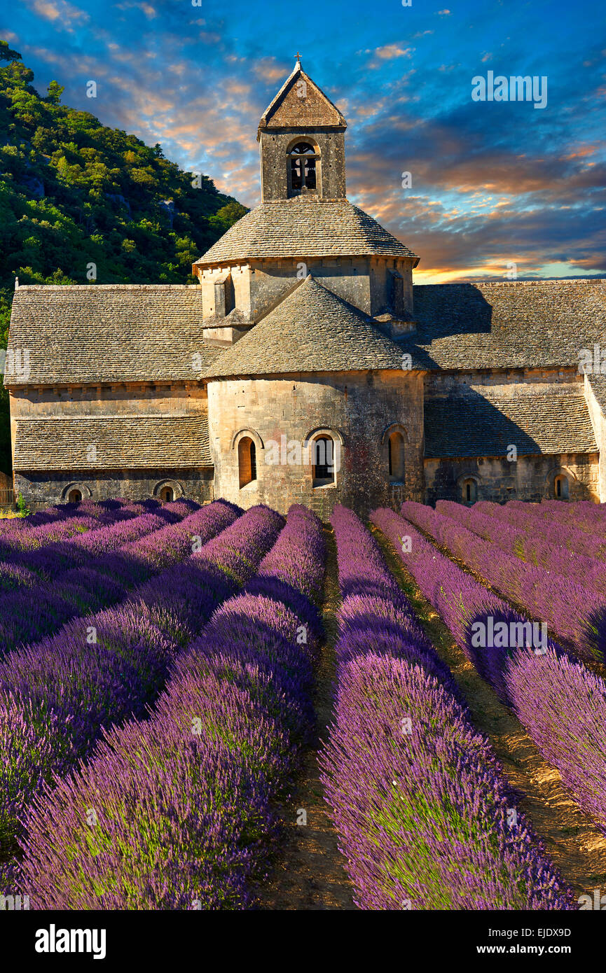 The 12th century Romanesque Cistercian Abbey of Notre Dame of Senanque, in  flowering lavender fields of Provence. - Stock Image