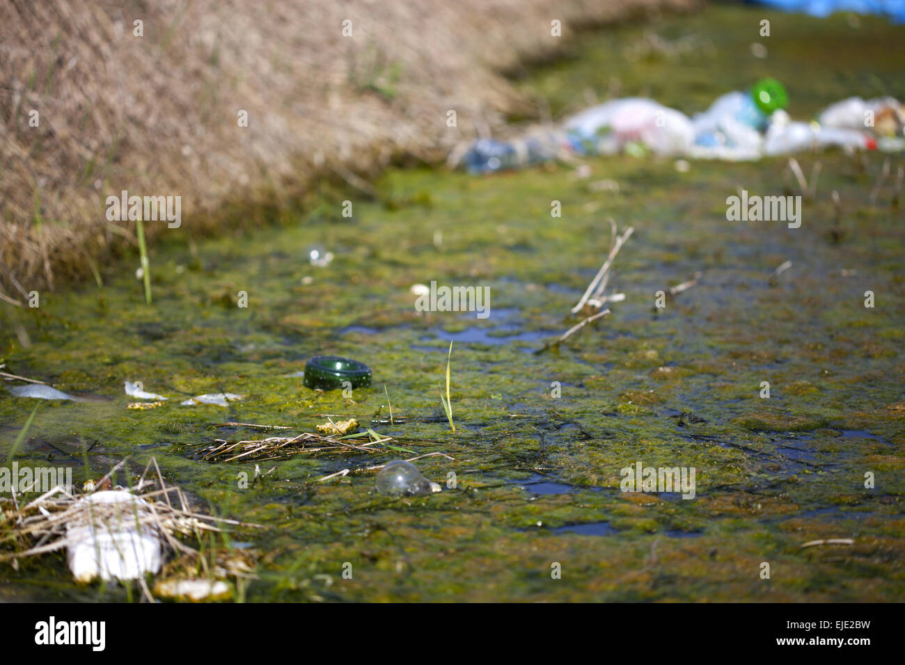 Polluted river with a selective focus on green water and a bottle in it - Stock Image