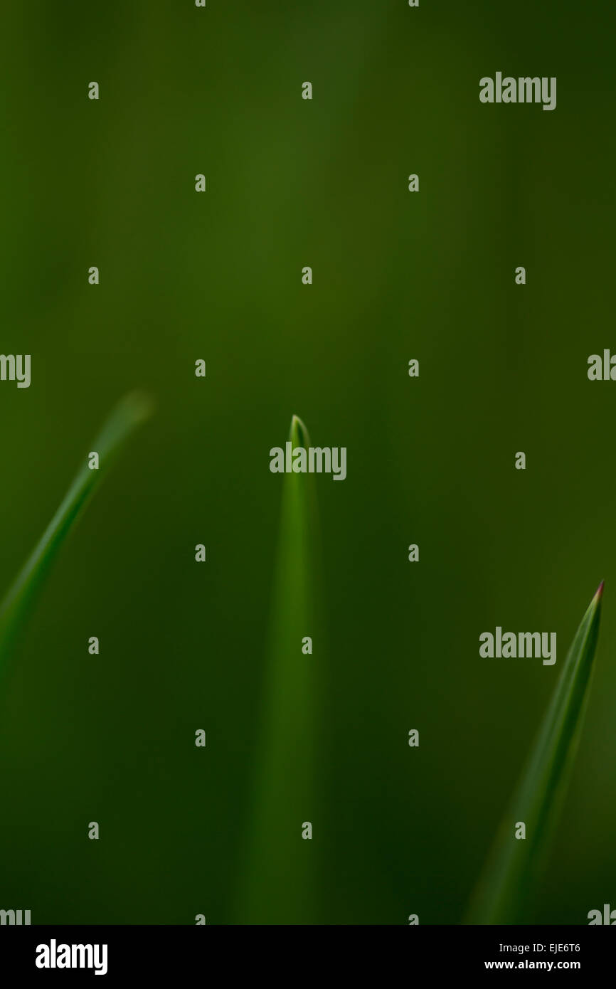 Tips of blades of grass. Rhoen Mountains, Germany - Stock Image