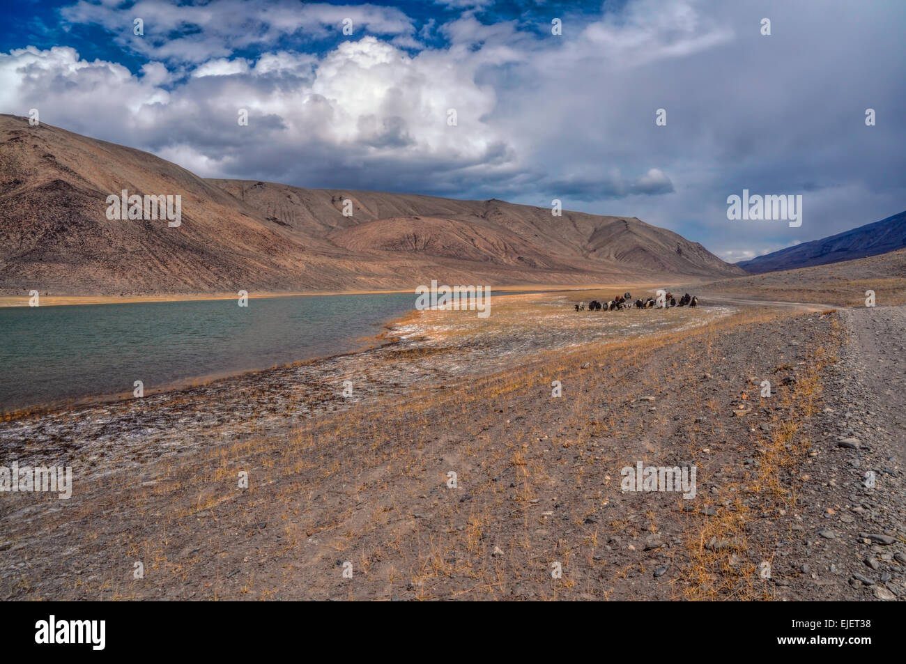Herd of yaks by the river in Pamir mountains in Tajikistan - Stock Image
