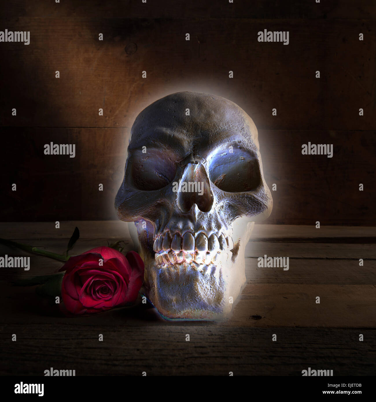 Halloween Glowing Skull With Rose - Stock Image
