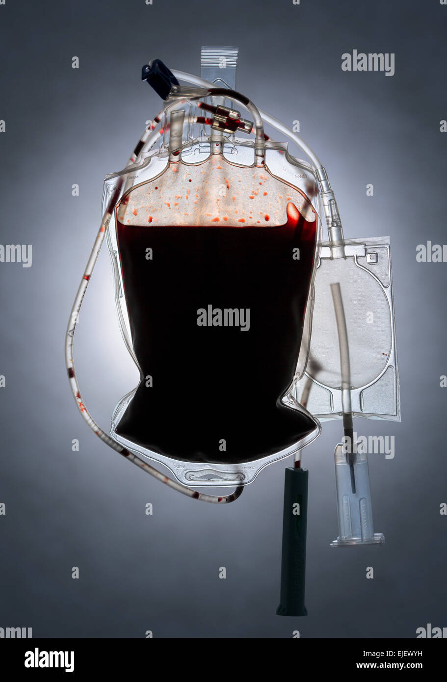 A full bag of dark rich blood with tubes wrapped around it. - Stock Image