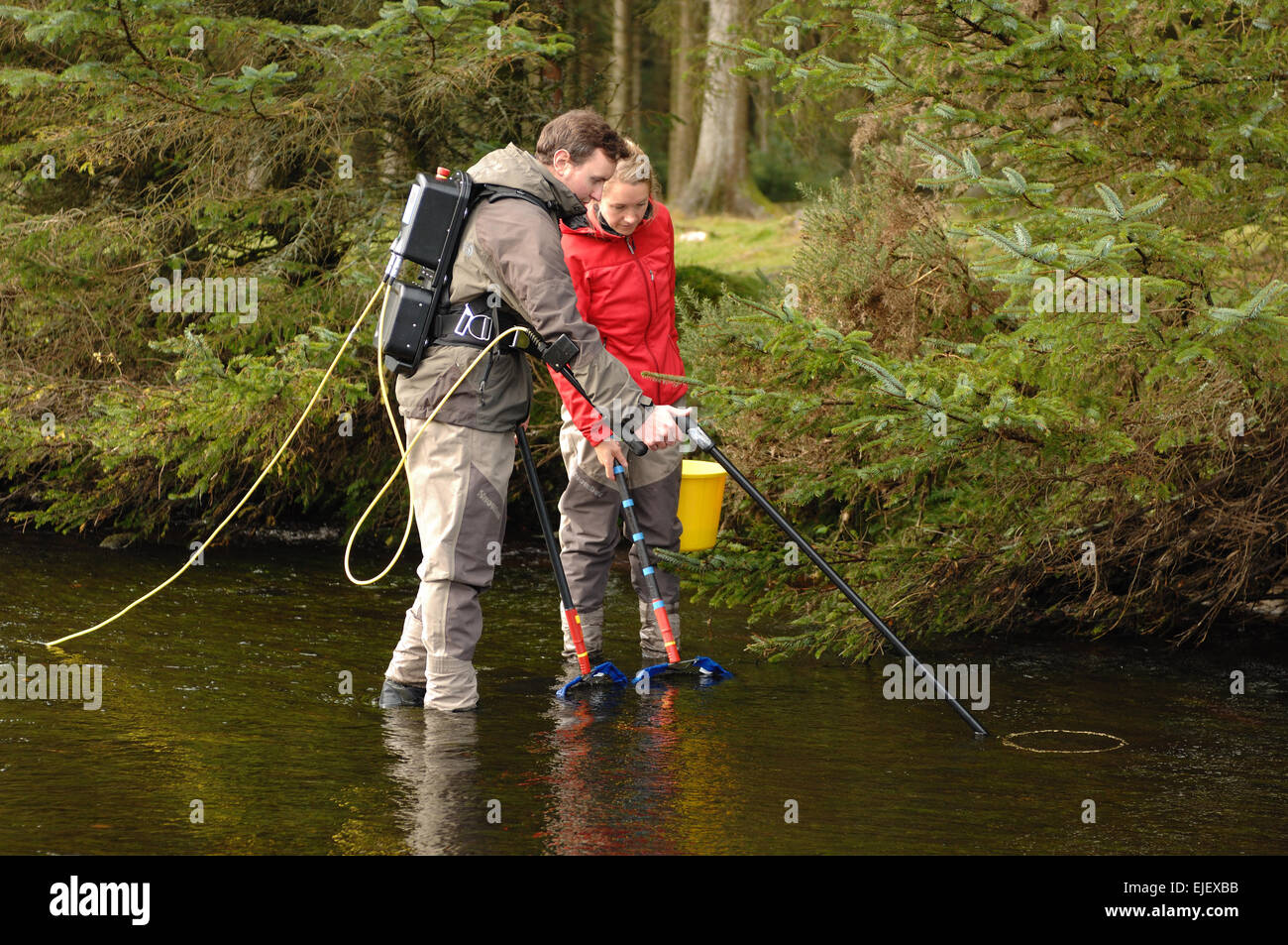Westcounty Rivers Trust electro fishing on the east dart river at Bellever Bridge,  Bridge Dartmoor National Park Stock Photo