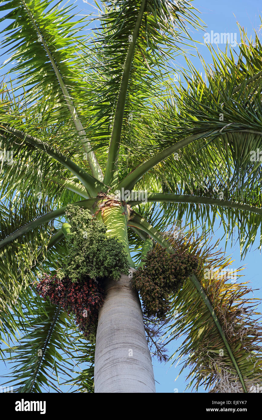 Palm tree fronds - Stock Image